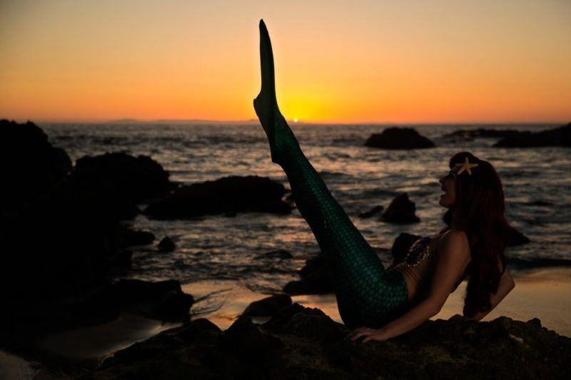 tail in air as sun setting